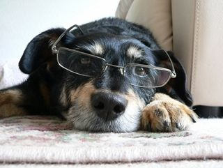 Analyst Doggy